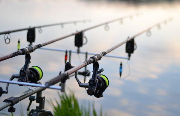 Pêcher en Lomagne Tarn et Garonnaise